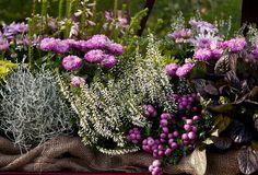 Underbara höstfärger i växthuset!