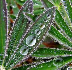 Water Droplets by CanonSX20.deviantart.com on @deviantART  -- looks like glass