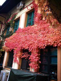 Kosice - autumn My Town, Autumn, Fall Season, Fall