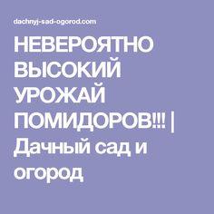 НЕВЕРОЯТНО ВЫСОКИЙ УРОЖАЙ ПОМИДОРОВ!!! | Дачный сад и огород