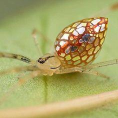 MIRROR SPIDER (SpiegelSpin)