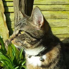 #Bonya #sniff  #cats #catstagram #catsagram #catsinstagram #catslovers #tabbycats #whenyouhaveacat #tabbycat #cat #catsface #catsnose #videocat