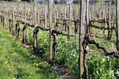 Von Steckenpferden und Filetstücken | #wine_passion | #wine_passion