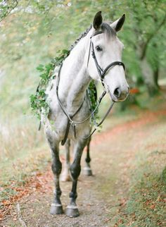The perfect accessory for the town & country bride, the bride's horse with greenery garland! Jo and Andrew - Ireland Destination Wedding - Part Five - KT Merry Photography