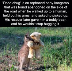 Cute animal facts Orphaned baby kangaroo only want to hug his teddy bear - WTF fun facts Cute Funny Animals, Cute Baby Animals, Funny Cute, Animals And Pets, Wild Animals, Animal Facts, Animal Memes, Wtf Fun Facts, Awesome Facts