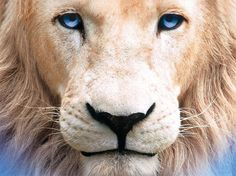 White Lion - Watch for on Tons of free kids movies & TV shows on this site! Free Kids Movies, Black And White Lion, Lion Eyes, Beautiful Lion, Beautiful Things, Beautiful Pictures, Lion Photography, Lion Illustration, Lion Quotes