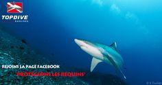 Let us protect the oceans - http://www.facebook.com/pages/Protégeons-les-requins/175814582526962