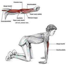 The Benefits of Yoga Sport Fitness, Yoga Fitness, Shoulder Stretching Exercises, Forearm Stretches, Shoulder Rehab, Yoga Pilates, Pilates Logo, Frozen Shoulder, Muscle Anatomy