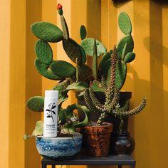 Planter Pots, Skin Care, Skincare Routine, Skins Uk, Skincare, Asian Skincare, Skin Treatments