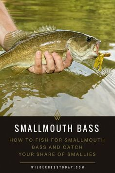 Bass Fishing Tips: How to Catch Smallies Grab your share of smallies this summer with our Smallmouth Bass Fishing Guide. Grab your share of smallies this summer with our Smallmouth Bass Fishing Guide. Bass Fishing Tips, Fishing Guide, Best Fishing, Trout Fishing, Kayak Fishing, Fishing Boats, Fishing Tricks, Fishing Tackle, Fishing Reels