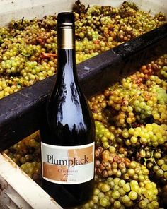 Plumpjack brought in the last of their #Chardonnay grapes for the year this past Friday. Red wines are next! #napaharvest #napavalley #harvest2013 #plumpjackwinery