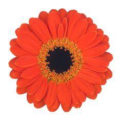 Free Postage Parking Permit Holder Skin PINK Flower Gerbera