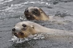 Sea lion rescue plan fails on fishing: Critics
