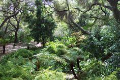 Image result for california lush garden