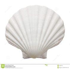 shell - Google 검색