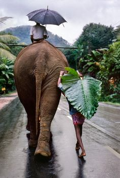 Elephant rider and pedestrian take different approaches to rain gear. India!