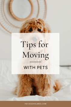 Moving is stressful enough - but how about moving with your furry friends? Advertise Your Business, Moving Tips, Pet Tips, Real Estate Investing, Real Estate Marketing, How To Know, Vulnerability, Home Buying, Blogging