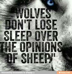 Wolves dont lose sleep over the opinions of sheep