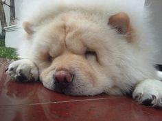 Sleepy face, Qaiser