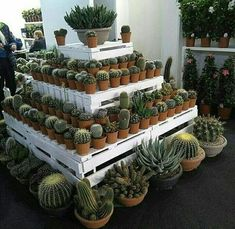 Lots of cactus to choose from. when is there enough cactus in your collection? Succulent Wall Art, Succulent Pots, Cacti And Succulents, Planting Succulents, Planting Flowers, Potted Plants, Cactus Pot, Cactus Flower, Garden Center Displays