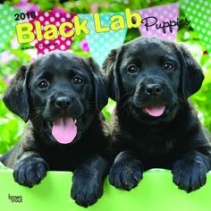 Black Labrador Retriever Puppies 2018 Wall Calendar