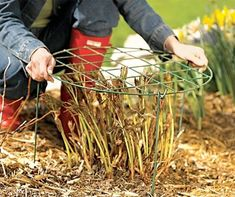 Gardening Tips Use these tips to ensure the perennials in your garden stay healthy and beautiful. - Use these tips to ensure the perennials in your garden stay healthy and beautiful. Organic Gardening, Gardening Tips, Flower Gardening, Garden Projects, Garden Tools, Peony Care, Growing Peonies, Home Vegetable Garden, Garden Care