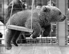 Baby Bear <3