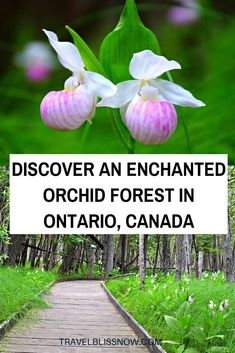 Discover an Enchanted Orchid Forest in Ontario Discover an enchanted orchid forest in Ontario, Canada Ontario Camping, Ontario Travel, North America Destinations, Canada Destinations, Beautiful Places To Visit, Cool Places To Visit, Places To Travel, Visit Canada, Canada Eh