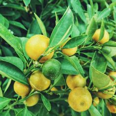All About Growing Fruit Trees