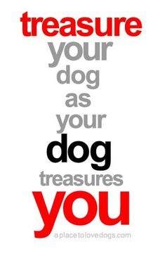 treasure your dog • from  APlaceToLoveDogs.com • dog dogs puppy puppies cute doggy doggies adorable funny fun silly photography typography quotes
