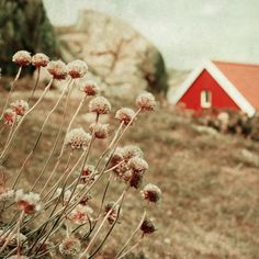Norwegian Landscape  Fine Art Photography Print  by kanelstrand, $29.00