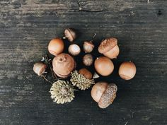 soupatraveler: So long autumn & acorns, it's time for pine...