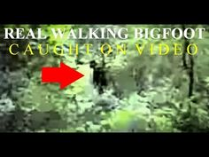 REAL WALKING BIGFOOT!! CAUGHT ON VIDEO!! - Man Runs To His Backyard To Film REAL SASQUATCH!! - YouTube