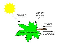 Image from http://www.sciencemadesimple.com/img_autumn/photosynthesis3.gif.