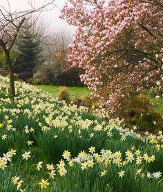 Tulipanes, narcisos y jardines de primavera