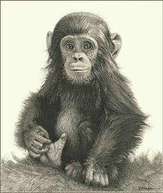 gekleurd Animal Sketches, Drawing Sketches, Sketching, Scratchboard, Pencil Art, Animal Pencil Drawings, Monkey Drawing Cute, Monkey Art, Ape Monkey