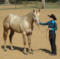 """His name is """"MJK Vanzi King Glo""""…aka """"King Glo""""… a two year old Classic Champagne AQHA Stallion…he's homozygous black…which means…""""King Glo"""" cannot sire a red foal…his genetics combination is listed as EEaaChch….""""King Glo"""" also carries the very rare champagne dilution…this dilutions change his coat color…if he did not have the champagne dilution…""""King Glo"""" would be a solid true black horse."""