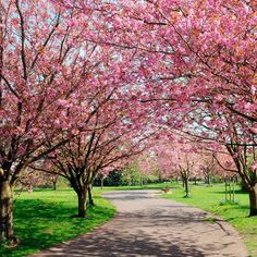 A neighborhood in full bloom - #Newark, NJ