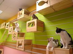 The Modular Cat Climbing Wall is the ultimate designer 'cat gymboree'.