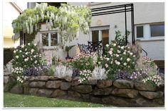 Summer of Love Clematis, Rosen Beet, Indian Summer, Motif Design, Outdoor Seating, Zeppelin, Summer Of Love, Beets, Garden Plants