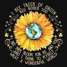 The Happy Hippie Sunflower Quotes, Sunflower Pictures, Sunflower Art, Sunflower Kitchen, Daisy, Rose Trees, Rose Flowers, Flower Pots, Sunflower Wallpaper