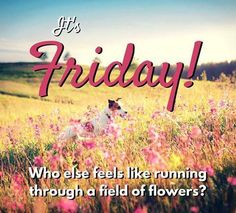 It's Friday! Let's all go run through a field of flowers!! #Exportersindia