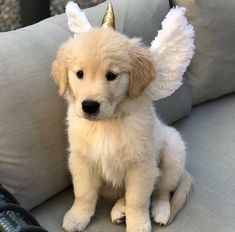 11 Big Fluffy Dog Breeds Perfect To Cuddle With - Golden Retrievers - Super Cute Puppies, Cute Baby Dogs, Cute Little Puppies, Cute Little Animals, Cute Funny Animals, Dogs And Puppies, Doggies, Adorable Dogs, Funny Dogs