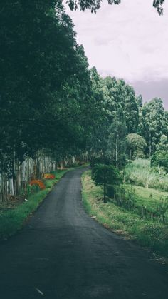 Path to Nature ★ Download more Nature Inspired iPhone Wallpapers at @prettywallpaper