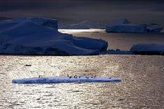 I will travel to Antarctica!