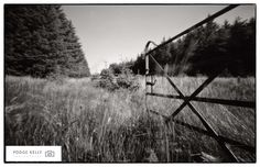 Pinhole Photography...I shot this in the Dublin Mountains July 2013.....Even in this digital age...Film has its place....Podge