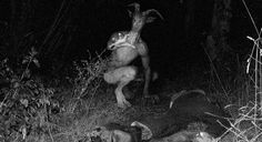 Goatman - Der Ziegenmann