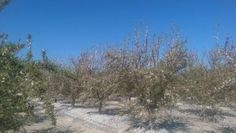 California, Fresno, water crisis, drought, almonds, agriculture, farming, Leon Kaye, Los Angeles