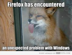 Funny fox pictures with captions