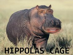 21 Nic Cage Face Swaps That Will Keep You Up at Night from Nic Cage Face. I find Nicolas cage face swaps so funny Funny Meme Pictures, Funny Captions, Hilarious Memes, Stupid Memes, Funny Images, 9gag Funny, Funny Facts, Funny Christmas Captions, Christmas Humor